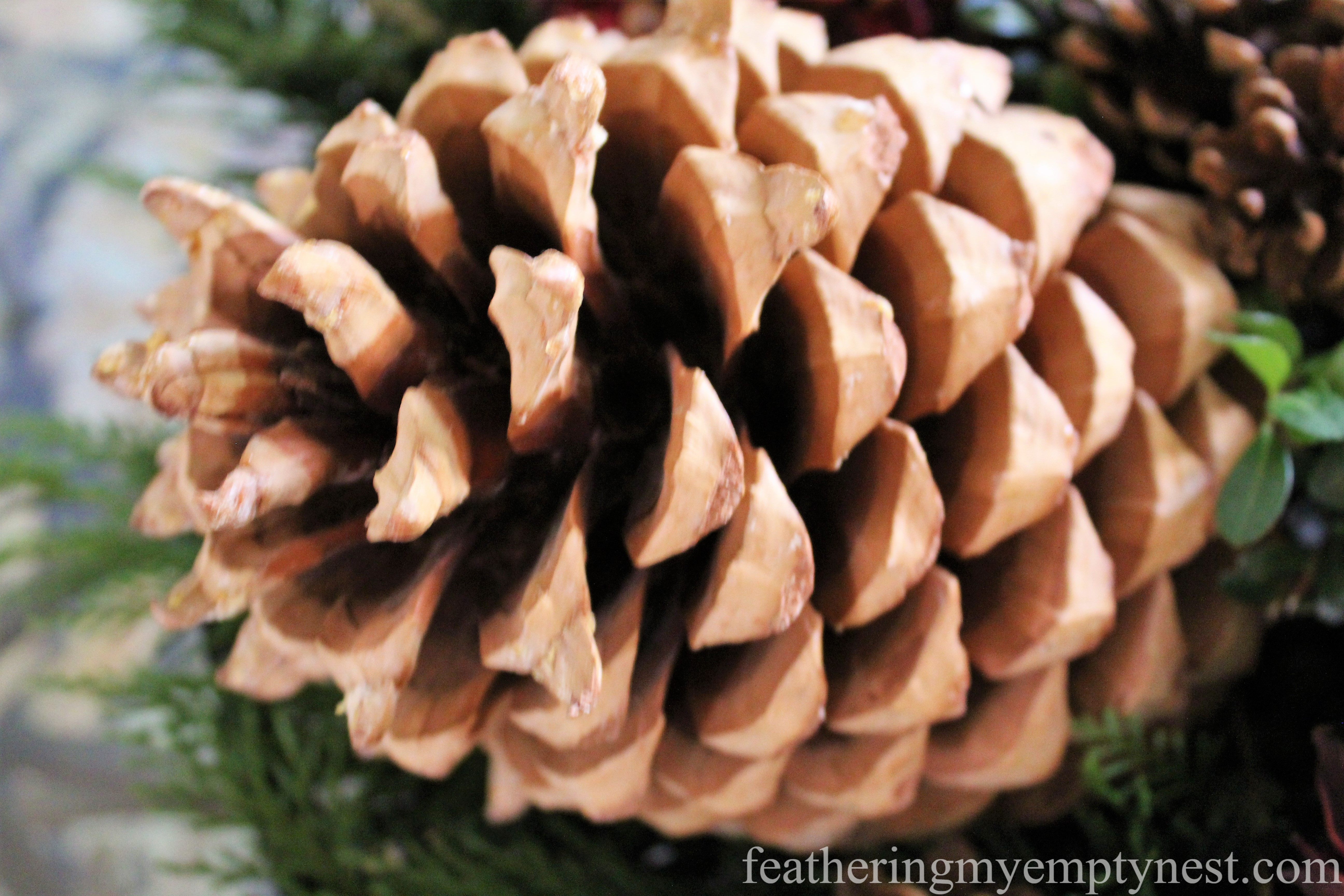 giant Coulter pine cones are featured in --Easy Fall To Christmas Coffee Table Arrangements