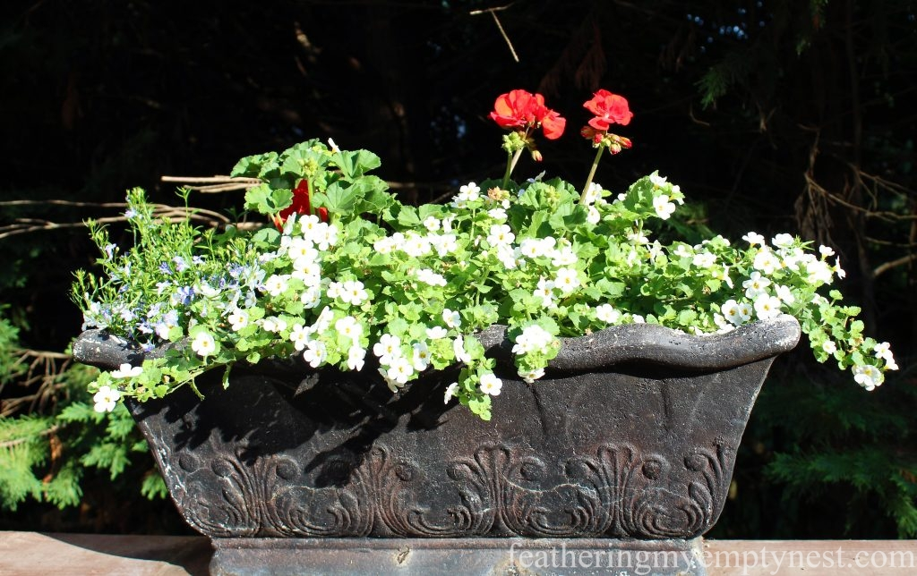 A window box filled with red Geraniums, Bacopa, and Lobelia sits atop the deck railing --Yellow and red place setting coordinates with the summer flowers in the planters on the deck.