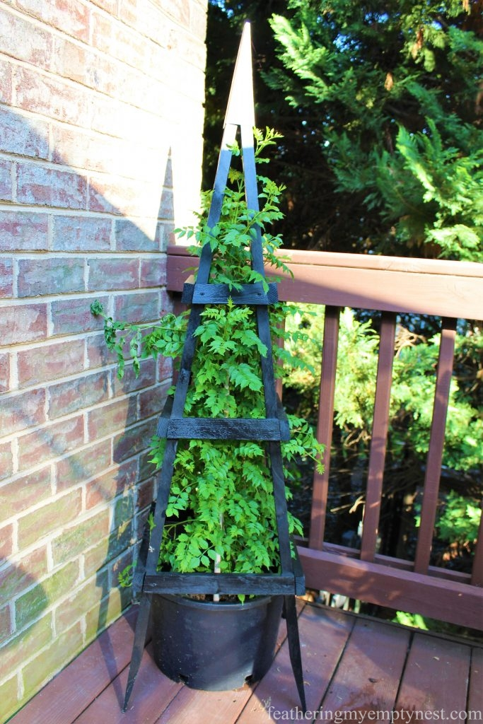 Trellis obelisk with climbing trumpet vine --Summer Flower Planters On The Deck