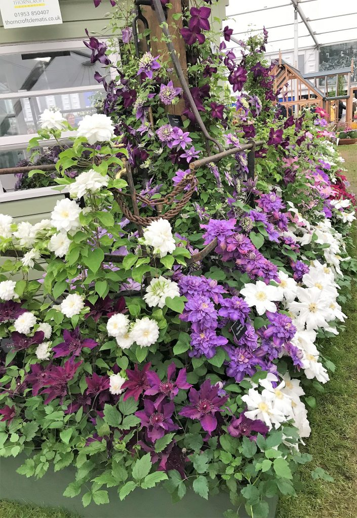 Clematis, 2018 Chelsea Flower Show --Why The Chelsea Flower Show Should Be On Your Bucket List