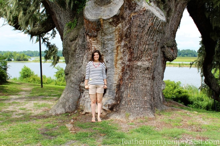 Middleton Oak --Exploring The Enchanting Gardens Of Middleton Place
