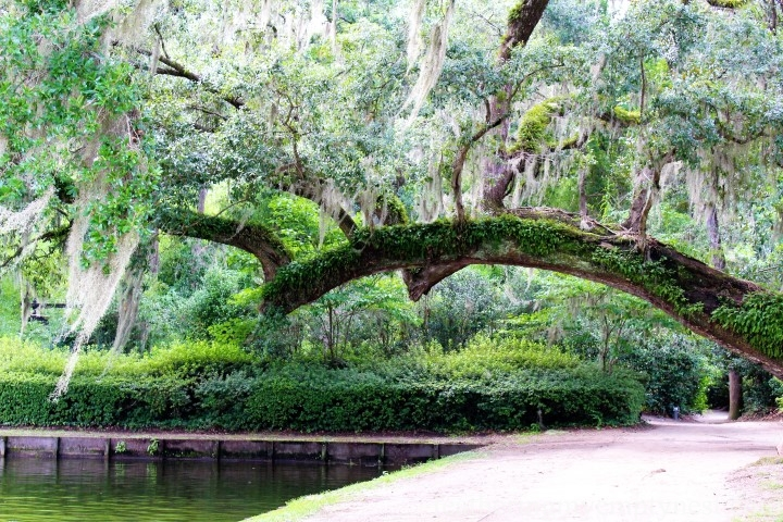 Exploring The Enchanting Gardens Of Middleton Place