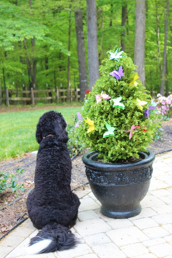 "Puppy contemplating the ""butterfly bush"" -- Butterfly Mother's Day Tablescape"