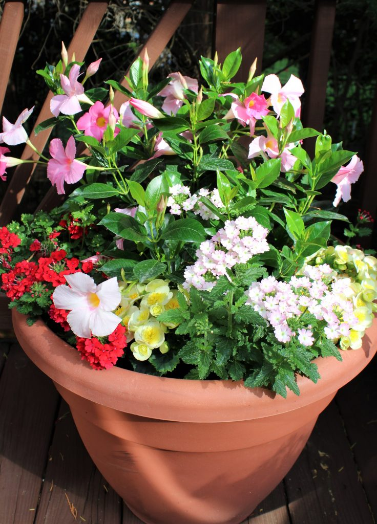 Large pots overflow with pink, red, and yellow blooms inspired by a favorite floral fabric.
