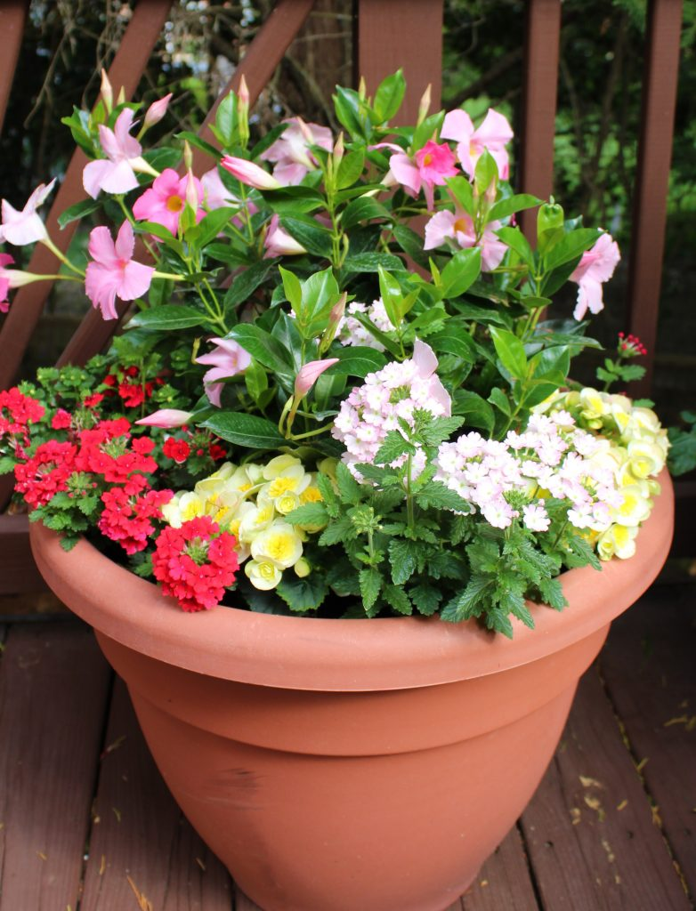How to create lovely summer planters inspired by a favorite floral print.