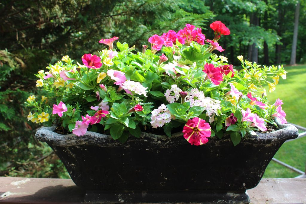 The lovely red, pink, and yellow flowers that fill this summer planter were inspired by a favorite floral print.